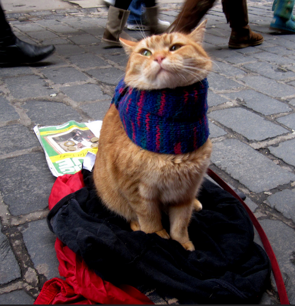 Bob the street cat styling a woolly scarf.  No relevance here really; just wanted to brighten up an otherwise sombre blog post. (Photo credit: Mathew Wilson)