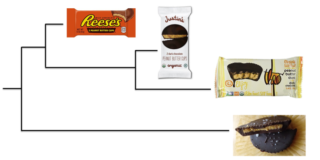 Peanut Butter cups - phylogenetic tree